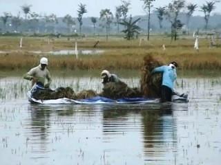 para petani yang lagi maen biliard panen ditengan banjir