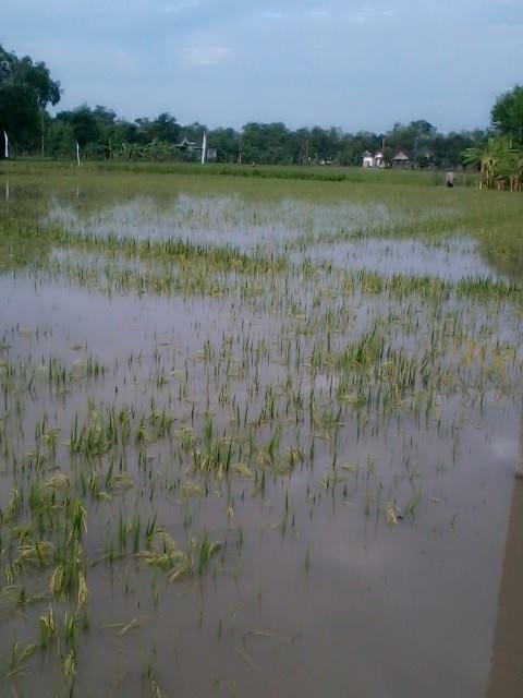 kondisi pertanian awal datangnya air banjir